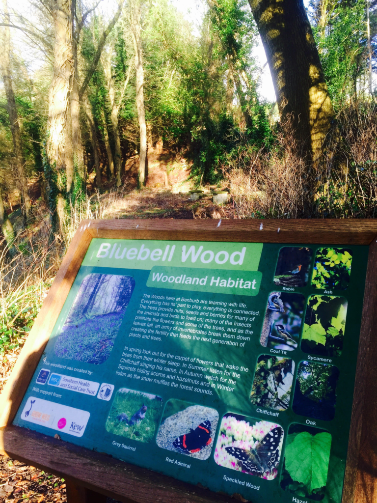 BLOG - Live It Experience It Picnic Places Benburb Bluebell Woodland Habitat