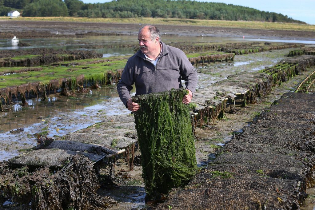 Patrice Bonnargent at his oyster farm in Killough County Down