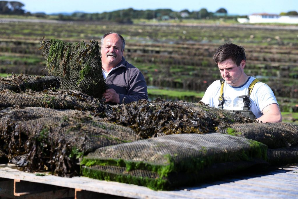 Patrice and Luc Bonnargent oyster farming in County Down