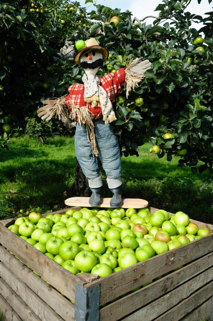The Richhill Apple Harvest Fayre takes place on October 28. 080917-099