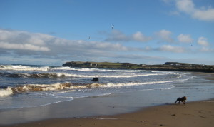 North Coast guide for dog walkers #liveitexperienceit Live It Experience It