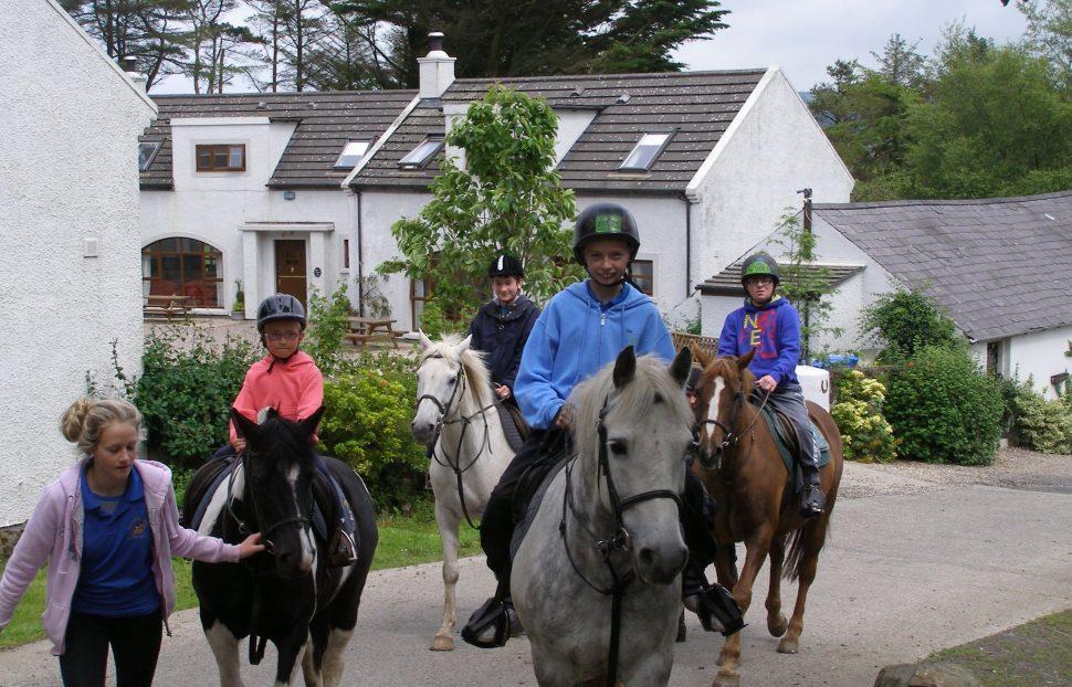 Horses at Maddybenny