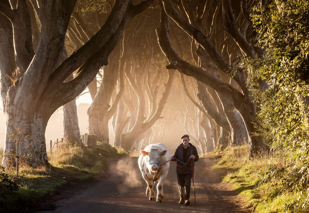 32294_The-Dark-Hedges Tour with Giant Tours Ireland